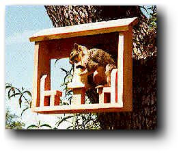Squirrel Feeders Wood Plans