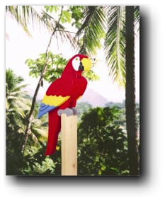Tropical Parrot Wood Plans
